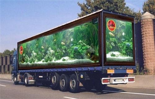 Aquarium Truck